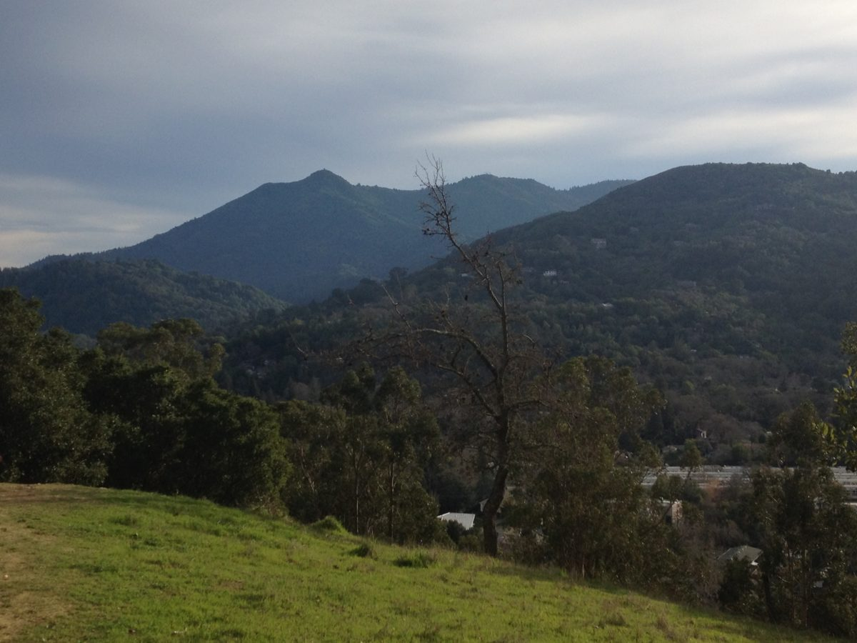 The back side of Mount Tamalpais, San Anselmo CA